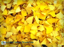 Layers of Yellow Leaves