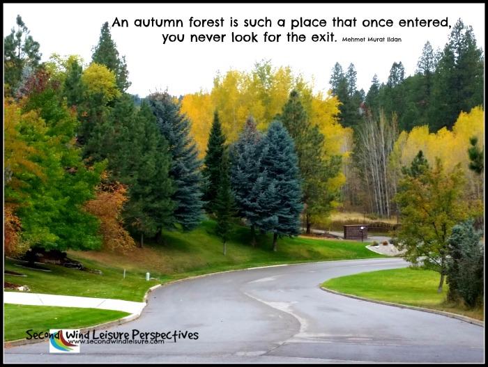 Joys of an urban forest