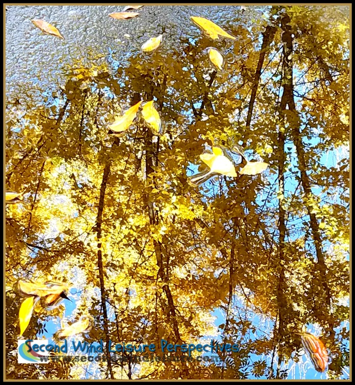 More reflections from the ginko trees
