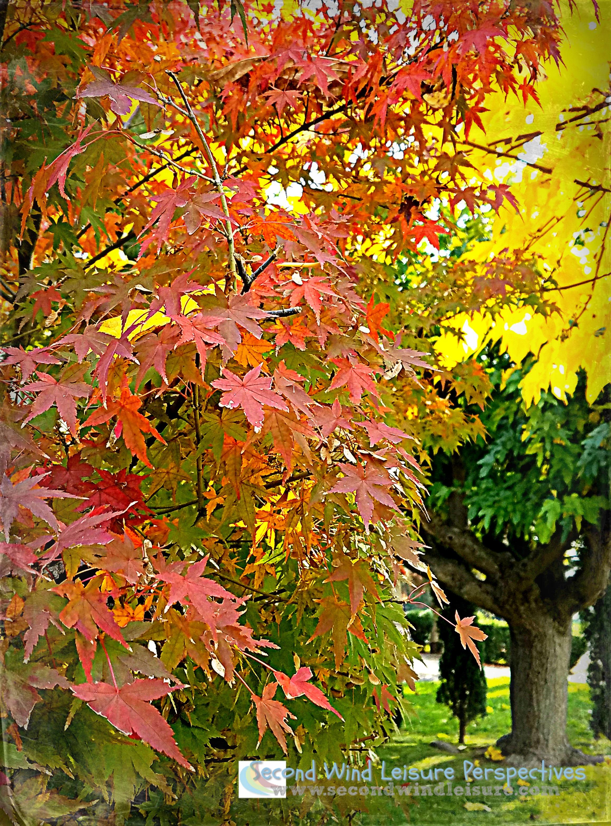Autumn in Transition