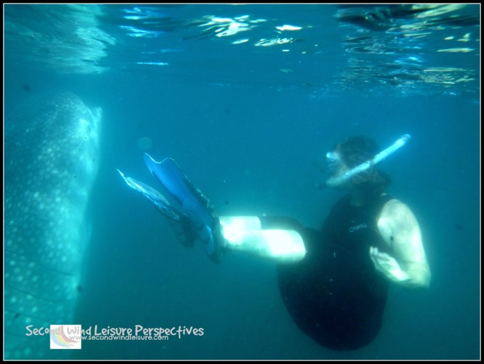 Terri peeks at a whale shark