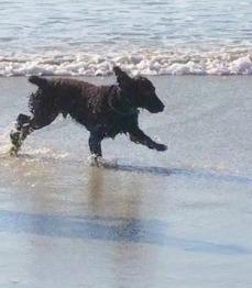 Brodie at ocean Beach San Diego