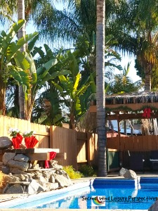 Sitting by the Pool in December