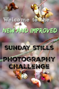 Sunday Stills Photo Challenge Graphic