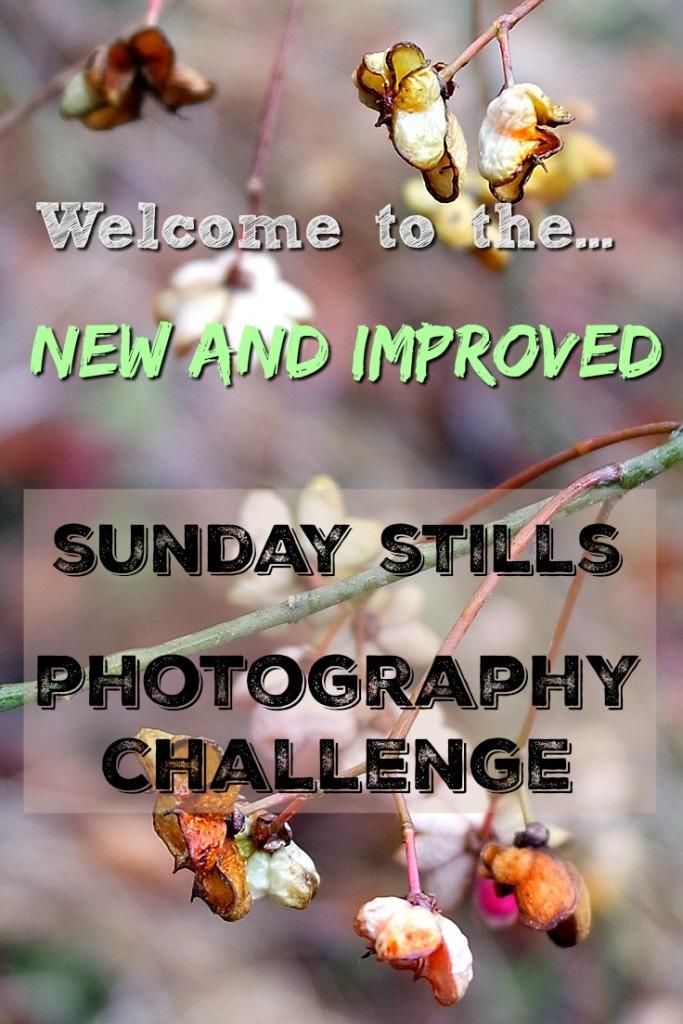 Sunday Stills Photo Challenge Graphic