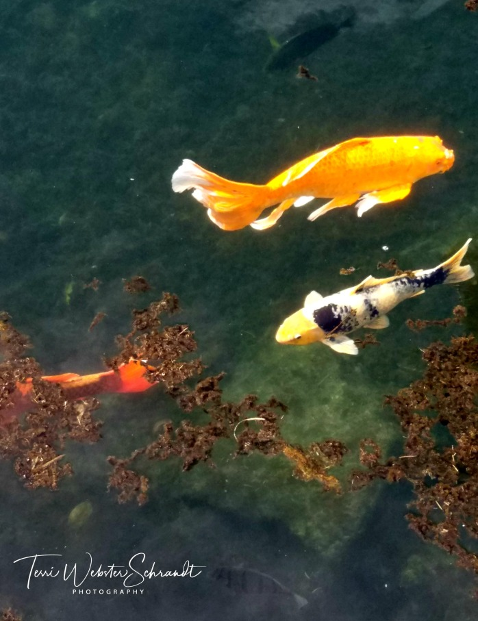 Fish appear to be floating in air
