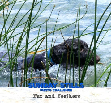 Sunday Stills Fur and Feathers Graphic