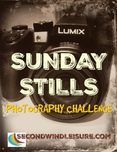 SundayStills_blogbanner