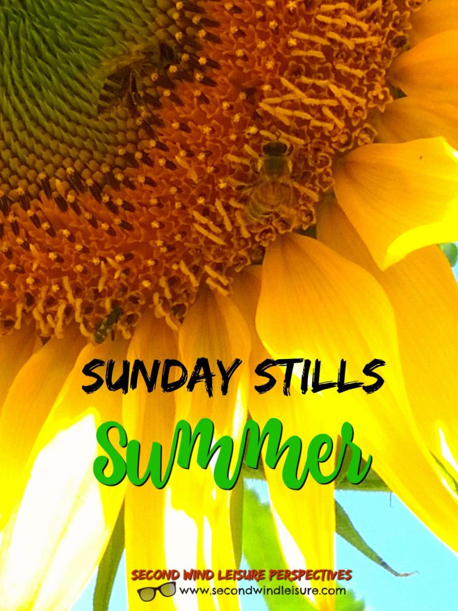 Sunday Stills Summer graphic