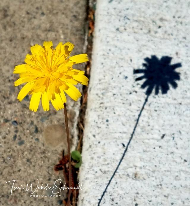 Flowers twinned