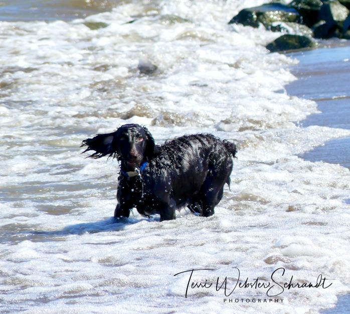 Wind blowing dog's ear
