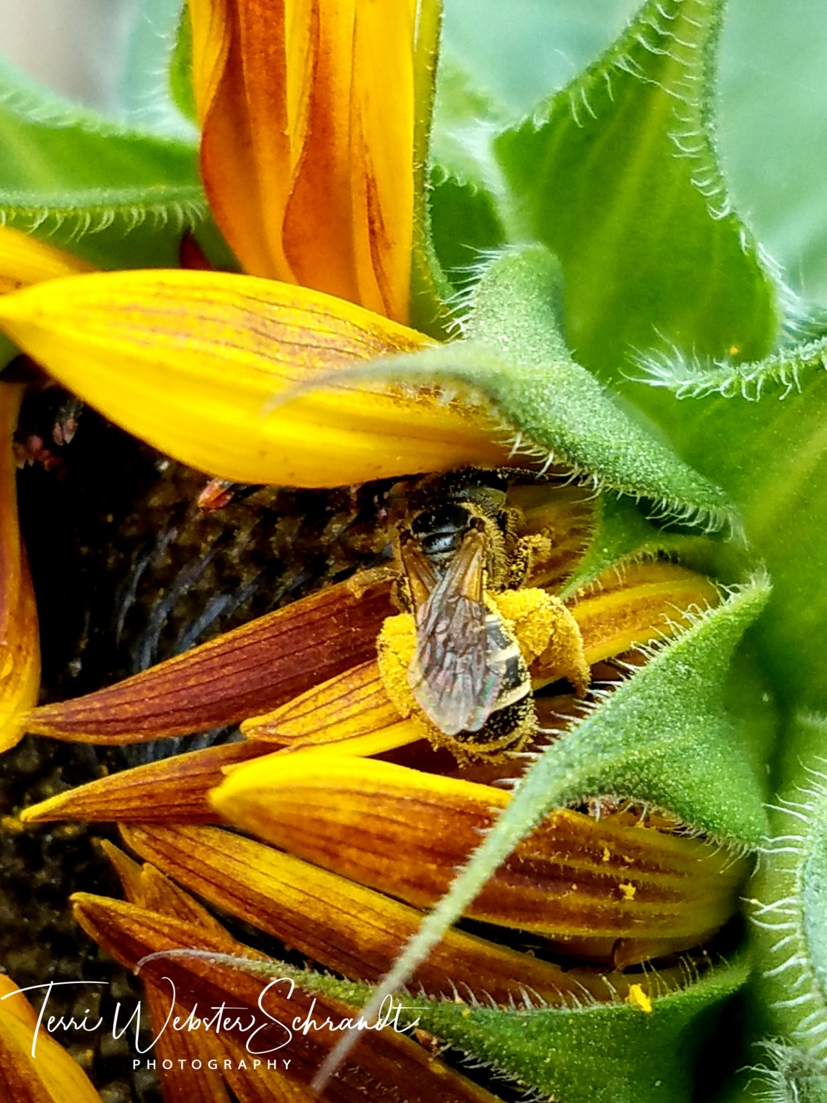 Busy bee is anything but lazy
