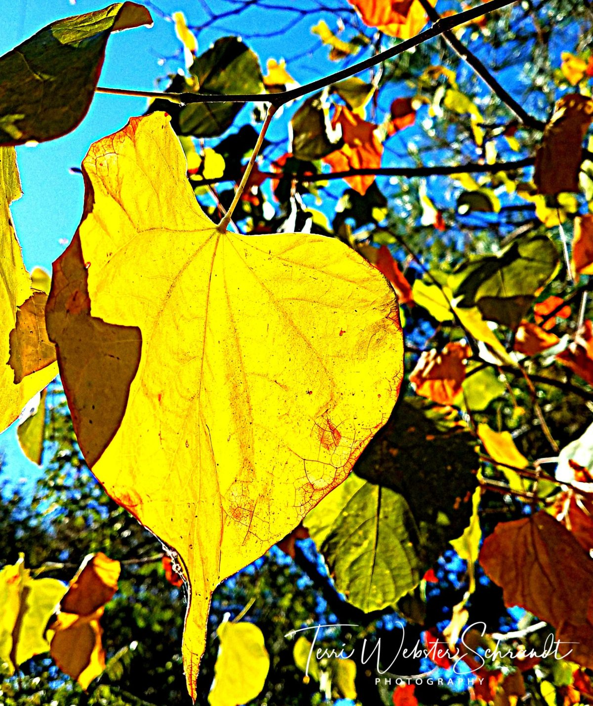 signs of fall leaves