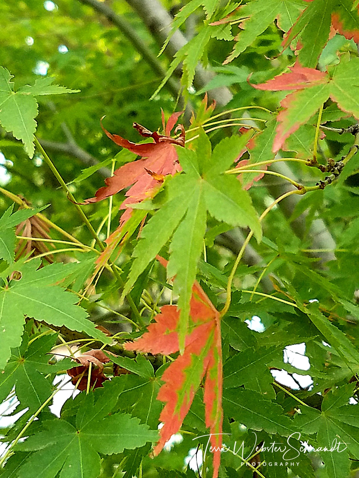 Green autumn leaves