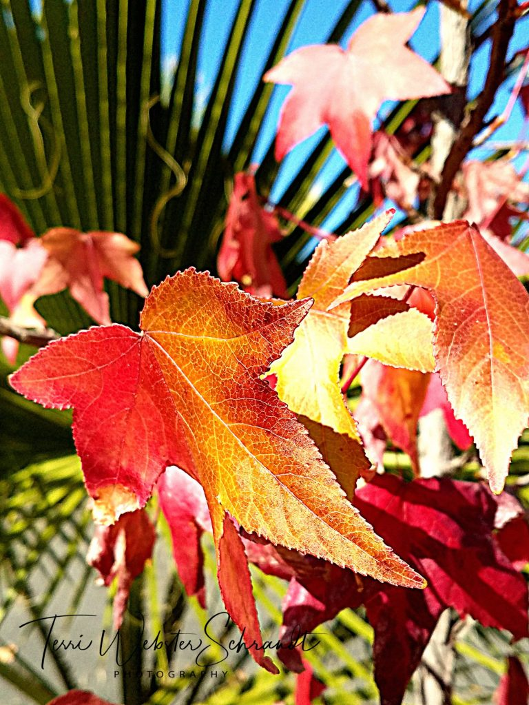 Autumn leaves and palm