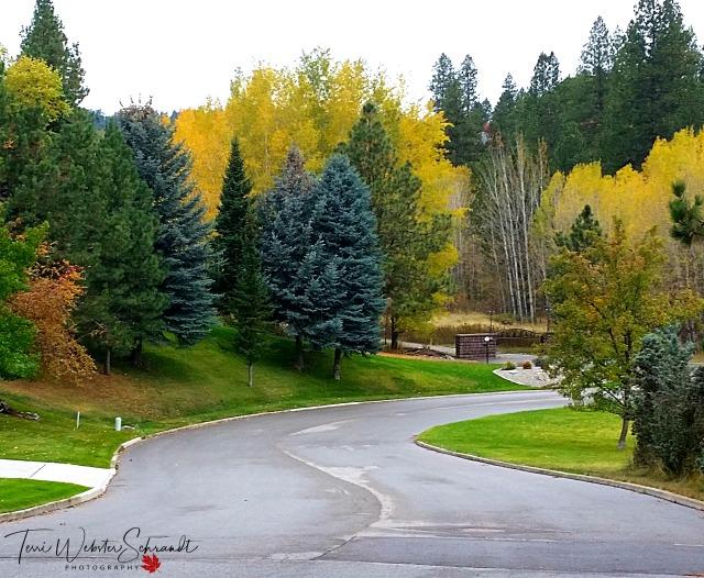 Spokane's Urban Forest