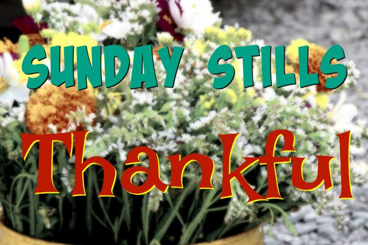 Sunday Stills Thankful