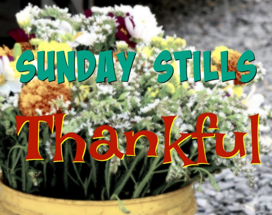 Sunday Stills Thankful