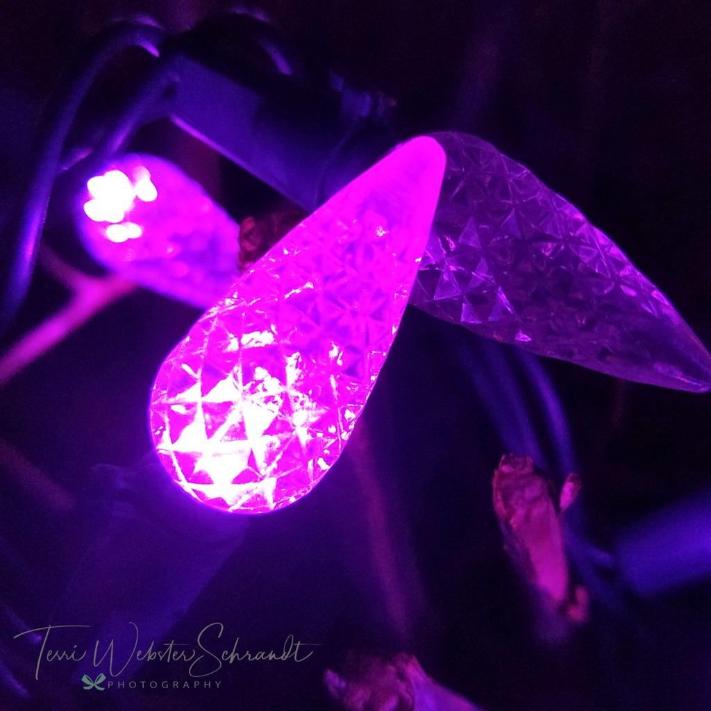 Festive Purple Lights