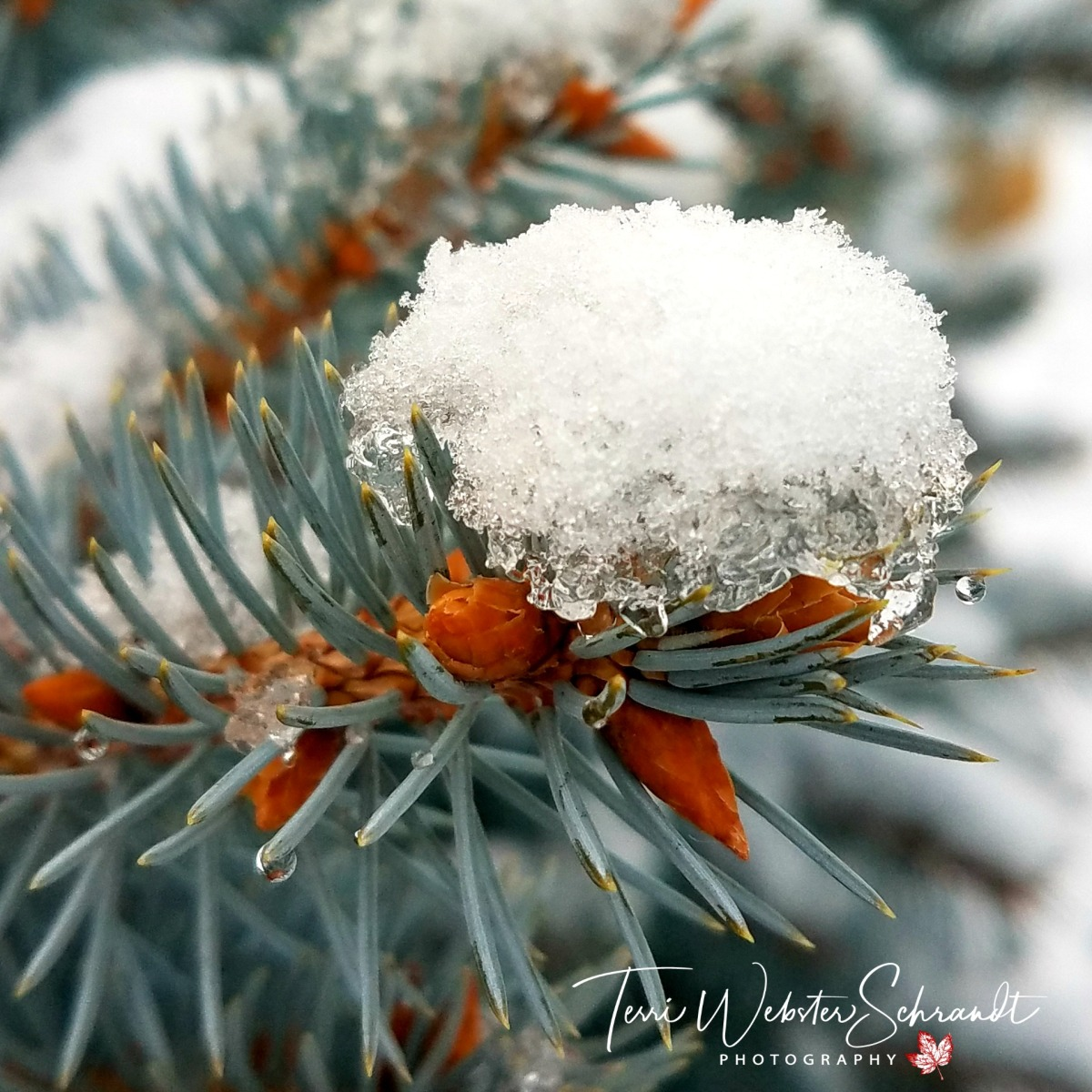 Winter Macro in #DecemberSquares