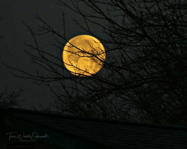 January Wolf Moon 2019