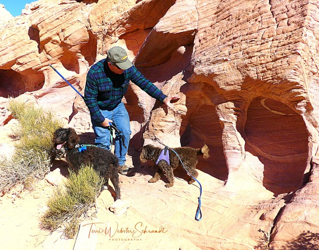 Red Rocks and Dogs