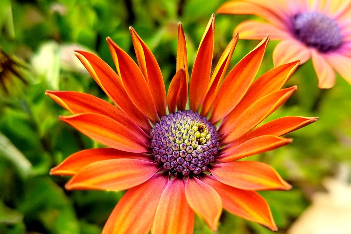 Spiky Spring Flower