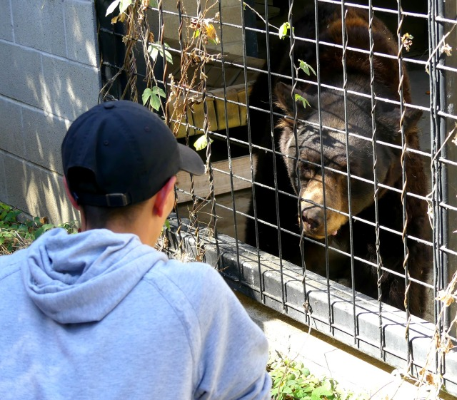 Student face to face with a bear