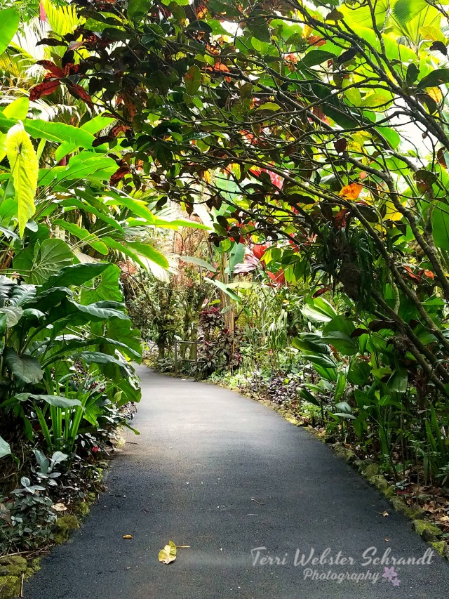 Pathway in the Botanical Gardens