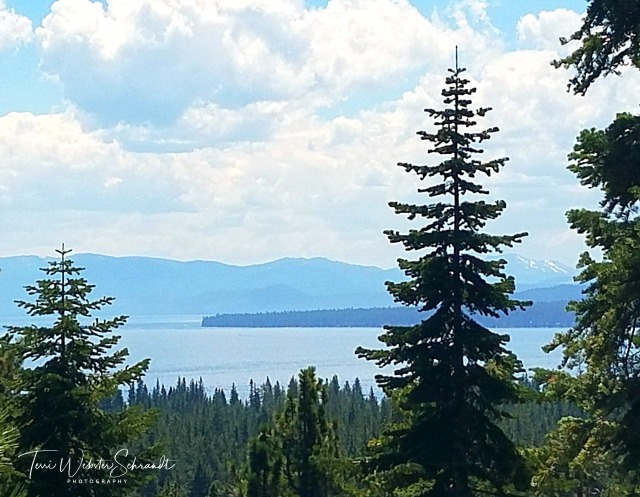 Pine trees surround beautiful Lake Tahoe.