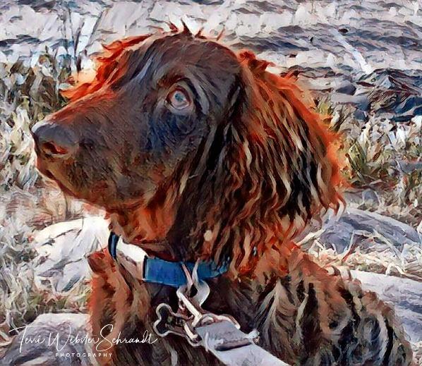 Dog Brodie