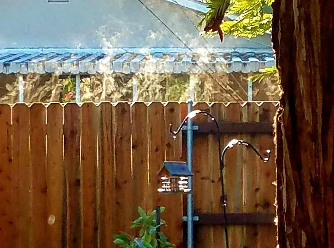 Early morning steam on fence
