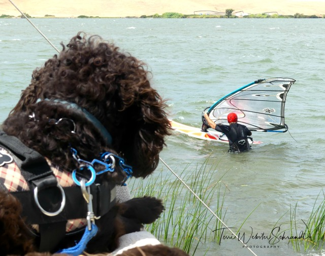 Brodie watching a windsurfer.