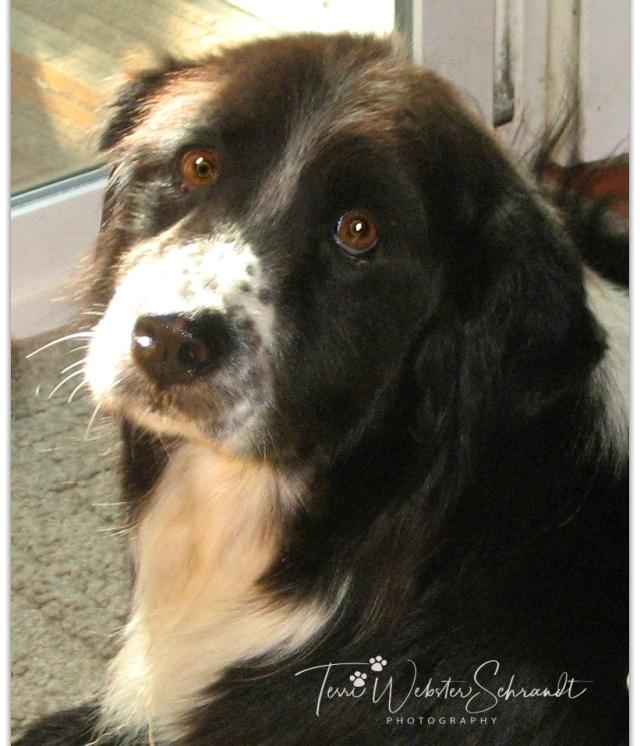 Black Dog Oreo