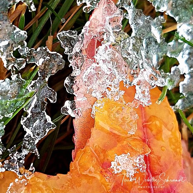 Frozen Autumn Leaf