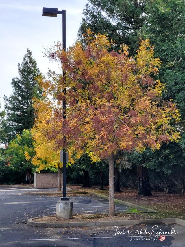 Calming Autumn Scenery
