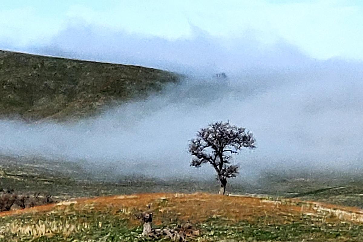 Gray Tree in Fog