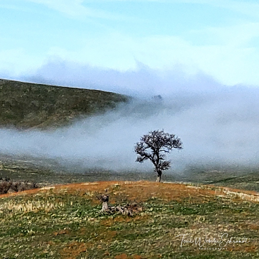 Gray Tree in Fog