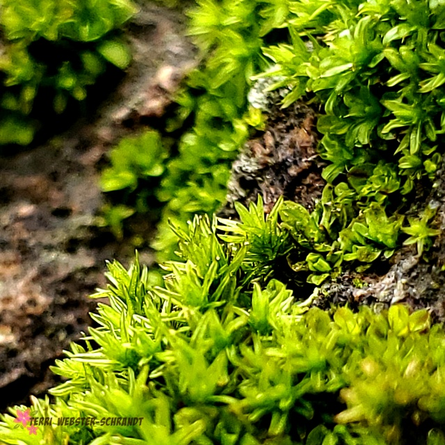 Macro Moss Forest