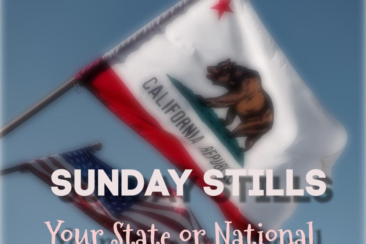California State Flag Graphic