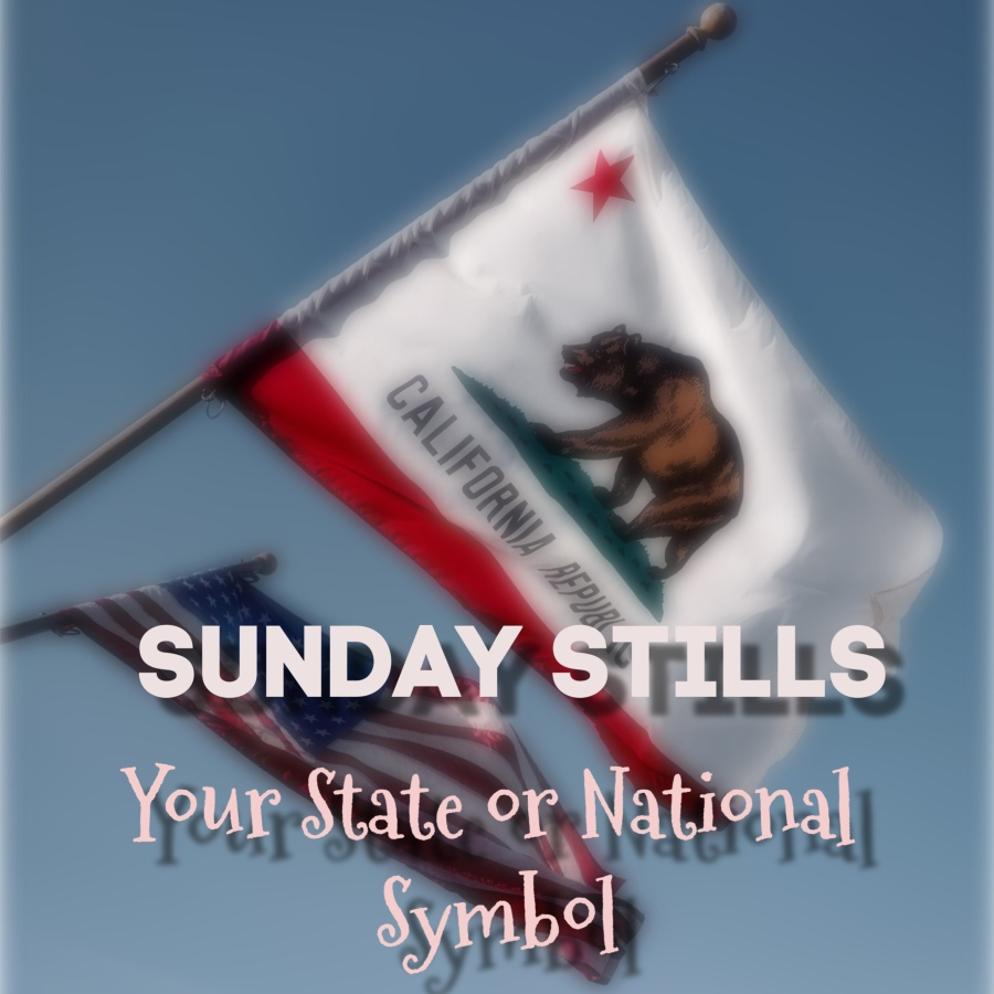 California State Flag Graphic
