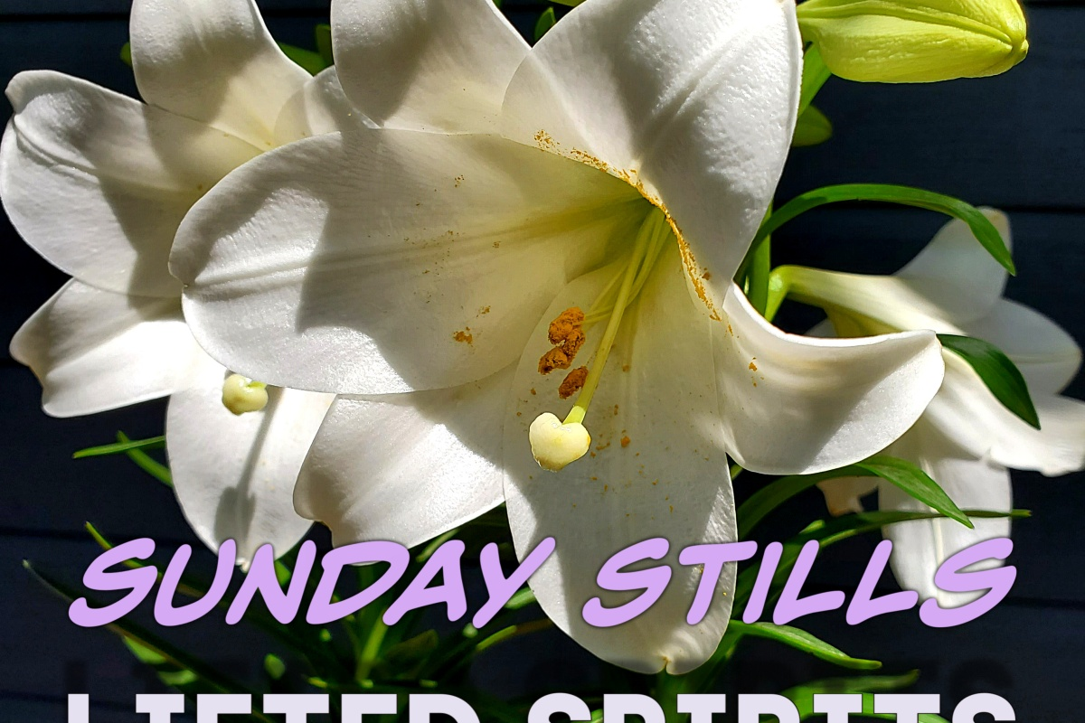 Sunday Stills Lifted Spirits