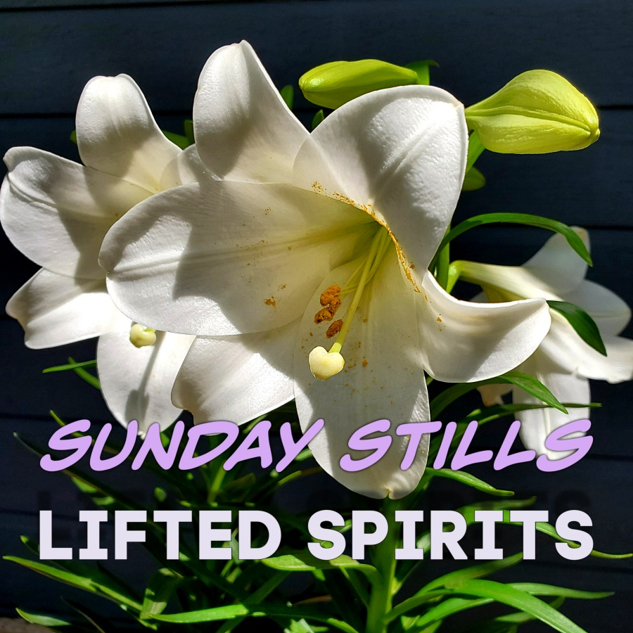 Sunday Stills Lifted Spirits