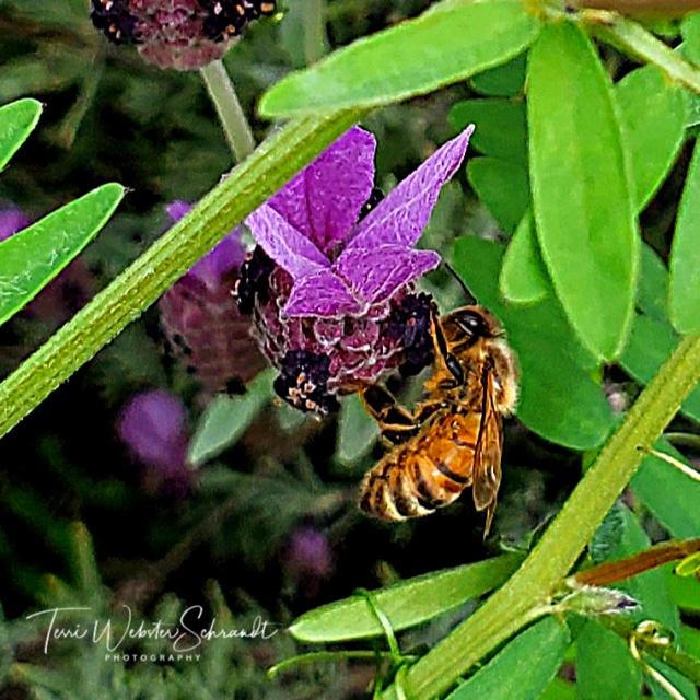 Awakening of spring and bee