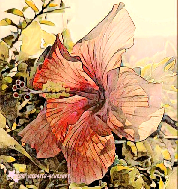 Painnted Hibiscus flower
