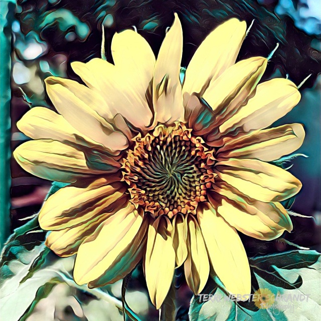 Painnted Sunflower