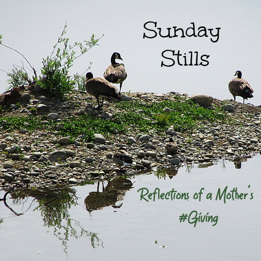 Sunday Stills duck banner