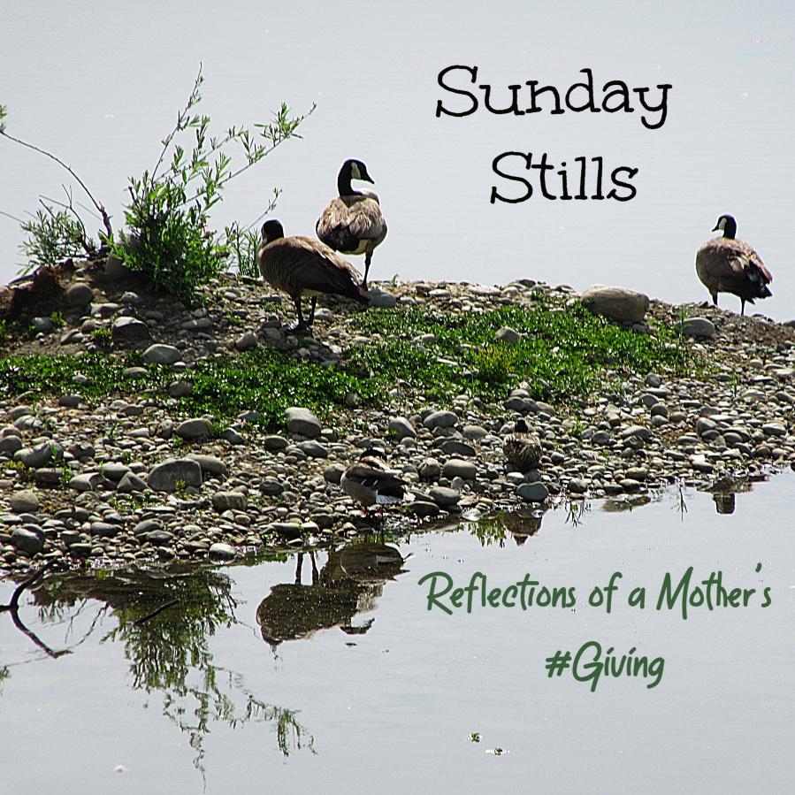 Sunday Stills duck banner
