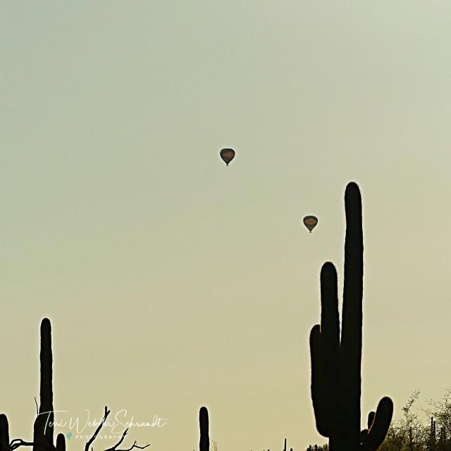 Balloons float in a desert sky