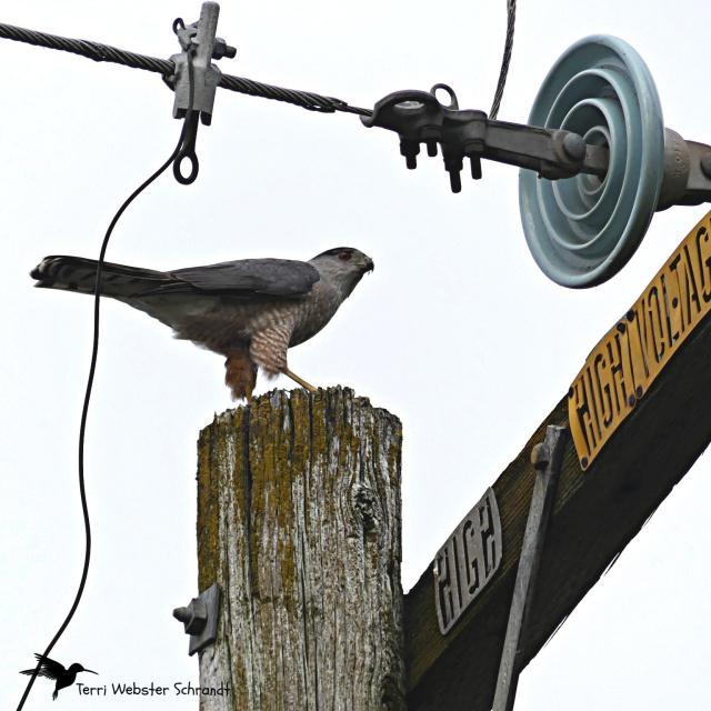 Kite on a wire
